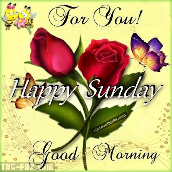 270457-For-You-Happy-Sunday-Good-Morning.jpg