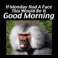 230558-If-Monday-Had-A-Face-This-Would-Be-It.-Good-Morning